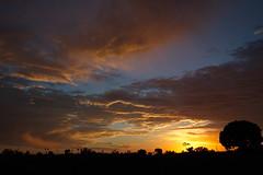 9/27 - evening (BorrowedLightPhoto) Tags: sunset sandiego canon7dii canonefs1022 92117 backyard