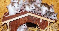 """Die Maus. Die Mäuse. Es sitzen viele Mäuse auf dem Dach. • <a style=""""font-size:0.8em;"""" href=""""http://www.flickr.com/photos/42554185@N00/29447005133/"""" target=""""_blank"""">View on Flickr</a>"""