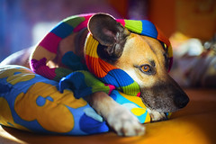 I heard there's going to be a very colorful autumn... (petrapetruta) Tags: cute eye light colors trendy sonya7 dog