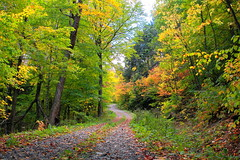 Fall (.enKay) Tags: cottage canon canon60d canada colorful colourful contrast cottagecountry green orange red yellow road rocks vacation nature landscape landscapephotography wideangle tree trees tamron2470 leaves leaf autumn fall season seaons october