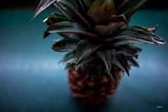 Pineapple - 292 / 366 Project (Tina Dean) Tags: pineapple 24mm pov green yellow 365project 366project 365project2016 366project2016 imagesfromtheshutter tinamdean tinadean tinagfw tmdean