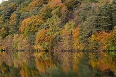 Mugdock Trees (Douglas Collinson) Tags: autumn colour park glasgow reflection leaves scotland milngavie westhighlandway