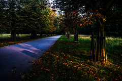 Red road (Melissa Maples) Tags: ludwigsburg germany deutschland europe apple iphone iphone6 cameraphone favorite favoritepark park autumn trees road path dawn morning