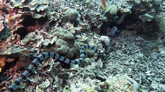 G16_160918 00098 2 (puikincz) Tags: bali nusapendia underwater diving secretgarden