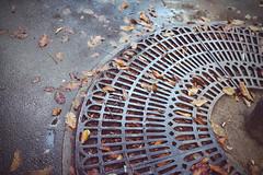 L'automne arrive (@YannGarPhoto) Tags: automne rue street feuille sol grille leaf autumn nikon nikond750 fx d750 sigma art 35mm sigmaart35mm dg hsm f14 yanngar