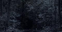 DeepBlackPath (Mr. Loeding) Tags: forest landschaft outdoor wald einfarbig monochrom dark darkness wood twilight night sunset exposure iso nikon dslr fear afraid grey blue green nature wildernis