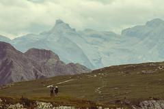 (Sofia Podest) Tags: tre cime di lavaredo italy alps dolomites landscape mountain hike hiking trekking people dreamy dream dreamscape rocks sofia podest sofiapodest