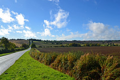 Preston Hill (AndyorDij) Tags: prestoninrutland autumn hedgerow trees tree road fields england rutland uk unitedkingdom 2016