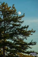 Sunset Moon (The Suss-Man (Mike)) Tags: clouds gainesville georgia hallcounty lake lakelanier lanier nature sky sonyslta77 sunset sussmanimaging thesussman water unitedstates