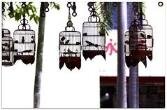 """"" - 7274 (willfire) Tags: willfire singapore caged bird birdcage tiongbahru hdb"