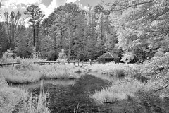 Interpretative Shelter IR (Neal3K) Tags: georgia ir infraredcamera kolarivisionmodifiedcamera bw blackandwhite 590nmfilter claytoncountywaterauthority newmanwetlandscenter wetlands