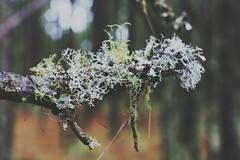 Con aroma a menta,  un nuevo color (Beth Nieves ,) Tags: musgo woods intothewoods bosque landscape plantas secret zacatln nature naturaleza