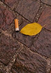 LA LUNGA AGONIA.... (FRANCO600D) Tags: cicca sigaretta foglia agonia tumore tabagismo tabagista porfido pavimento terra smartphone samsung note4 franco600d