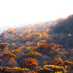Treetops of sky thumbnail