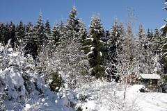 Schneelandschaft (Gina Biernath) Tags: schnee winter snow stimmungsvoll ruhe blauerhimmel weiserschnee bume tree verschneitelandschaft landscape htte deutschlandgermany thringen thringia sonne sun wow flickrsbest