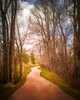 Twisted Trail - Textured (byron bauer) Tags: byronbauer path trail track road forest trees fence sky clouds winter painterly topaz simplify impressions texture winding twisting curving meandering perspective vanishing point bare naked denuded orton haze soft grass rock