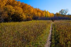 Walk with me (stevenbulman44) Tags: 2470f28l polarizer lseries fishcreek park color landscape outdoor autumn fall orange line sky blue canon