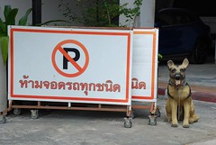 No Barking (jcbkk1956) Tags: bangkok thailand dog alsatian fake figure sign parking street thonglo nikon d80 nikkor 18135mmf3556 barrier