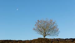 Tree and Moon (Outdoorjive) Tags: other autumn homekingslynnnorfolk flikr walking desktop places uk norfolk eastanglia