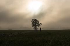 (CarolienCadoni..) Tags: sonyslta99 sal2470z tree silhouette backshot hat backlight landscape nieuwbuinen drenthe nederland netherlands november foggy mist misty sky clouds