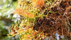 Tree_06625 (tombomba2) Tags: blumen blten pflanzen bloom blossom blhen flowers plants