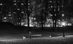 The Night Walker (Joe Josephs: 2,861,655 views - thank you) Tags: centralpark joejosephs nyc newyorkcity travelphotography copyrightjoejosephs fineartphotography landscapephotography outdoorphotography ny usa blackandwhitephotography blackandwhite dogs dogwalking pets landscapes landscape nightphotography night photojournalsim