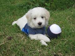 CIRO 38 DIAS (OBJETOS MUUTTAA) Tags: dog naturaleza canon vida perros animales mascotas seres seresvivos