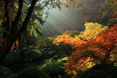 Light Cast on Paradise (PhotoScenics) Tags: travel autumn autumnfoliage trees fall nature beautiful beauty oregon landscape japanesegarden scenery colorful scenic foliage pacificnorthwest scenics cartwright fallfolliage sceniclandscape photoscenic photoscenics