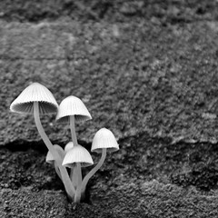 Fungi on the Wall (@noutyboy (Instagram)) Tags: autumn bw holland fall mushroom monochrome canon mushrooms eos zwartwit herbst herfst nederland thenetherlands fungi 28 f28 nieuwegein 1755mm nout 550d eos550d noutyboy
