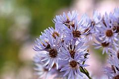 Wildflower Bokeh (Read2me) Tags: flower white dof bokeh cye pregamewinnersweep thechallengefactory friendlychallenges gamesweepwinner superherowinner pregameduel gamex2sweepwinner