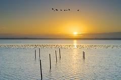 Sunrise in december (with halo) ( Jenco van Zalk) Tags: sun holland water netherlands birds clouds sunrise landscape bay fishing nikon december day natuur wolken clear lee zon flevoland landschap weerspiegeling d300 ochtendlicht waterkant zonsopkomst wolderwijd leefilter jenco