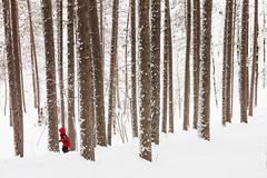 { Winter Frolic } (Boreal Bird) Tags: minnesota duluth winterwonderland northwoods snowywoods