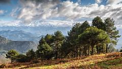 Trees (Jos Carlos Photography) Tags: morning autumn espaa mountain fall maana landscape spain europa europe asturias paisaje otoo montaa sueve principalityofasturias