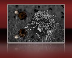 Poppy_MG_3996 (www.jonathan-Irwin-photography.com) Tags: post image manipulation ps poppy processing