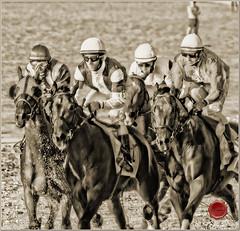 Roar_5303 (Rosano) Tags: fauna caballos carreras sanlcar rosano e330 zd70300