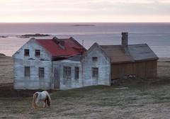 Iceland - May 2015 (3 Wild Sheep) Tags: 2016 iceland osar vatnsnespeninsula farm horses house midnightsun seascapes spring structure