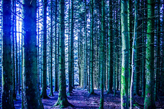 Light and Dark (Brian Travelling) Tags: light dark forest trees sunlight atmosphere outdoor clydemuirshielregionalpark windyhill trail scotland scenery scenic scottish