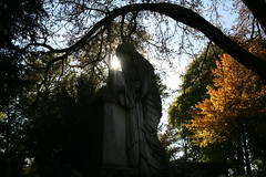 Light / maria full of grace (osswald.heuft) Tags: friedhof cemetery grabmal grab herbst autumn fall baum colors colorful