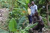 2016 Oct - Saturne inspects coffee plants (Foods Resource Bank) Tags: haiti caribbean coffee farmers men women pruning improved income humanitarian food security development charity hunger