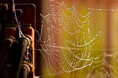 Rust in Peace, Tractor. (violetchicken977) Tags: rust decay neglect grunge iron cobweb orange
