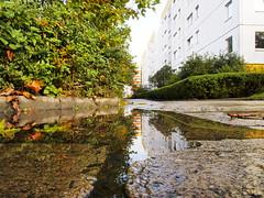 161019-0076 _Wuhle_SOOC1_ (Pixel-Cat) Tags: vorort suburb platte vorstadt plattenbau siedlung architectur architecture herbst autumn regen sonnenschein rain sun sunshine sonne olympus omd em5 berlin hellersdorf reflection reflektion pftze puddle mzuiko1250mm13563iiez