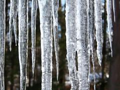 icicles (jajapiggy) Tags: ice