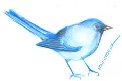 dibujo de pajaro (ivanutrera) Tags: pajaro bird animal ave dibujo draw drawing lapicesdecolores coloredpencils sketch sketching