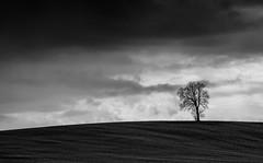 Bleak... (klythawk) Tags: lonelytree fields stormy clouds lines minimalism bleak black white grey sony a7ll 70200mm maplebeck nottinghamshire klythawk