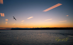 Reflections in the Sunset.jpg (Eye of G Photography) Tags: pugetsound usa sunsetsunrise sunset northamerica reflections mukileto seagull places washingtonstate