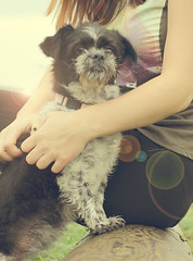 24/365 Lua (yanakv) Tags: dog perro canon 50mmf18stm truelove 365days 365dias me