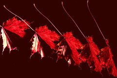 autumn fall (Morag.) Tags: leaf leaves autumn fall red colour color light flash nikon d3300 nikkor strobe strobelight