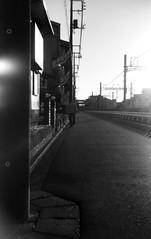 (maturity) (Dinasty_Oomae) Tags: bolsey  bolseyb2 b2  blackandwhite bw monochrome outdoor  chiba   funabashi  load  dusk