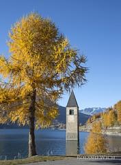 Reschensee (Rolandito.) Tags: reschensee italien italy italia alto adige sdtirol lago di resia campanile kirchturm herbst fall autumn lrchen larch