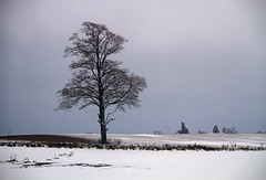Monday Mood (Matt Champlin) Tags: monday blah stormy moody tree snow snowy lonetree nature landscape peace peaceful quiet home cny canon 2016 skaneateles